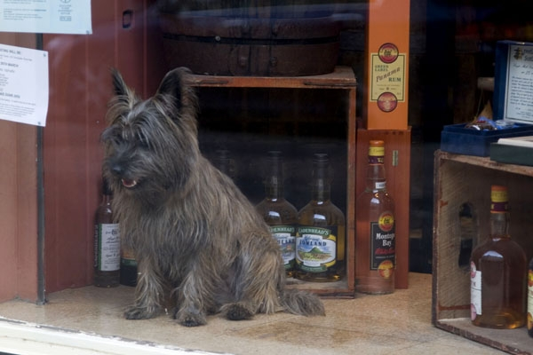 Send picture of Whisky dog in a whisky shop in Edinburgh from United Kingdom as a free postcard