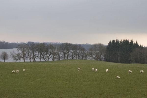 Spedire foto di Landscape near Edinburgh with grazing sheep di Regno Unito come cartolina postale elettronica