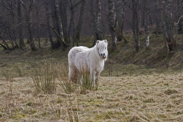Send picture of Horse grazing in Scotland from United Kingdom as a free postcard