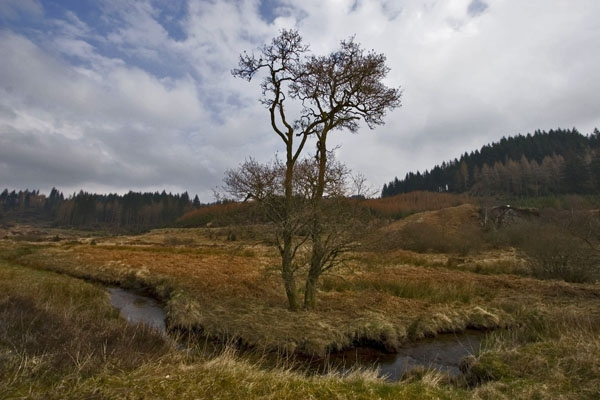 Send picture of Nature in the Trossachs, a nature area in Scotland from United Kingdom as a free postcard