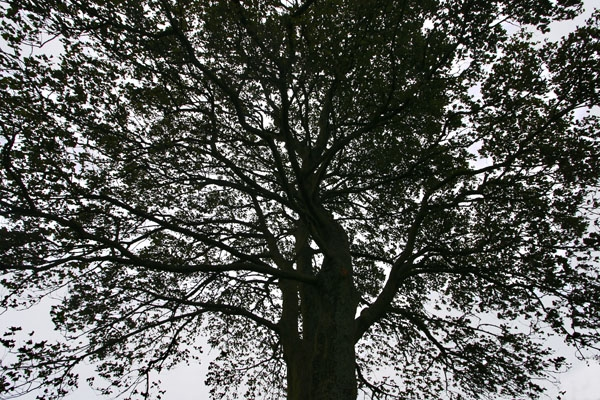 Enviar foto de Tree of Sycamore Gap in Northumberland de Reino Unido como tarjeta postal eletrónica