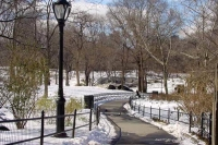 Foto van Central Park in winter - U.S.A.