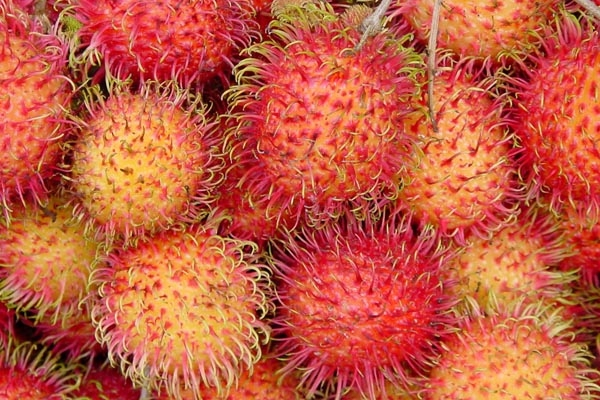 Send picture of Rambutan fruit from Vietnam as a free postcard