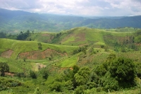 Foto de The lush and green landscape of the Central Highlands - Vietnam