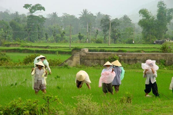 Send picture of People working in the rice fields from Vietnam as a free postcard