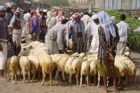 Foto van Sheep market in Sanaa - Yemen