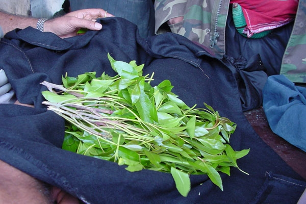 Send picture of The much desired qat leaves from Yemen as a free postcard