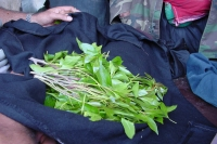 Foto van The much desired qat leaves - Yemen
