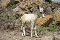 Photo de Young donkey in Haraz mountains - Yemen