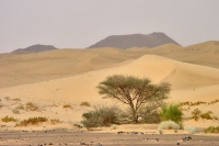 Foto de Desert in the Ma'rib area - Yemen