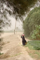 Foto van A windy day in Yemen - Yemen