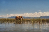 Foto di Elephant on the banks of the Zambezi river in northern Zimbabwe - Zimbabwe